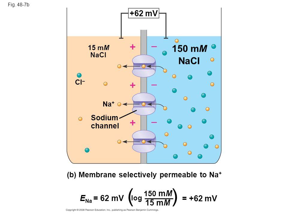 ( ) 150 mM NaCI +62 mV ENa = 62 mV = +62 mV 15 mM Sodium channel