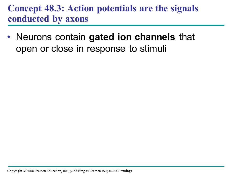 Concept 48.3: Action potentials are the signals conducted by axons