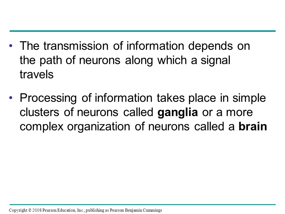 The transmission of information depends on the path of neurons along which a signal travels