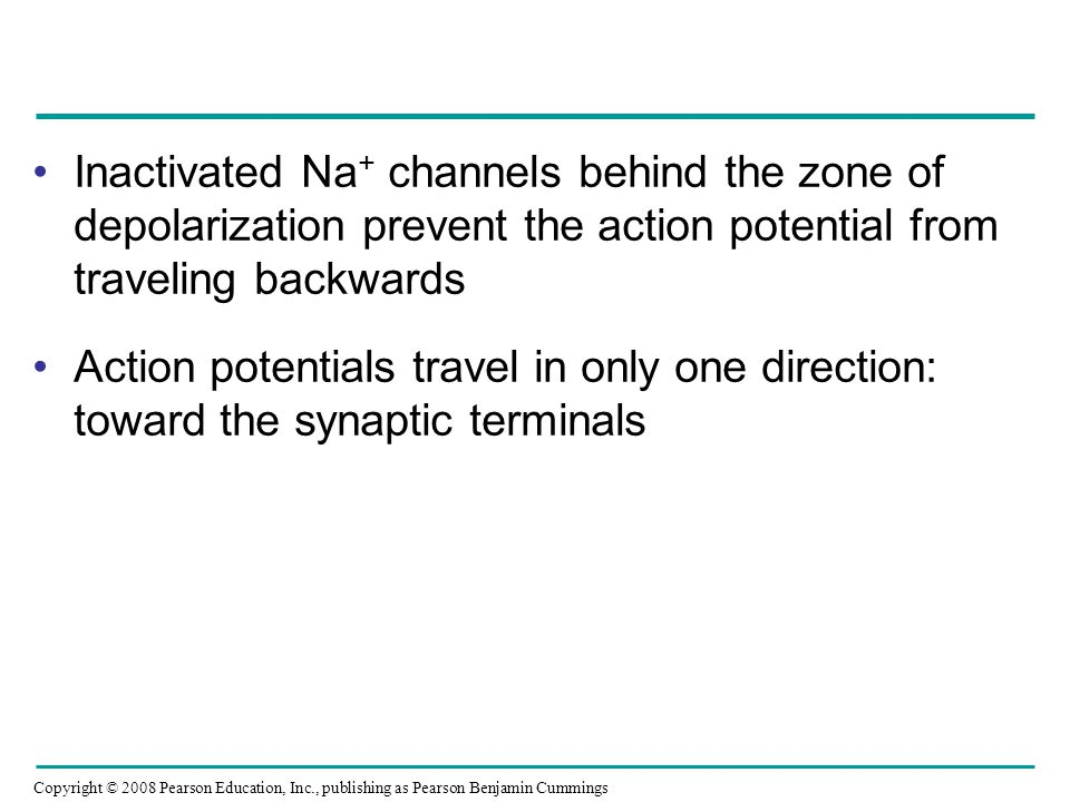 Inactivated Na+ channels behind the zone of depolarization prevent the action potential from traveling backwards