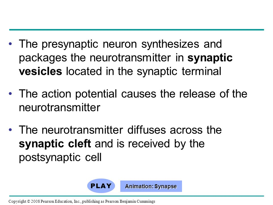 The action potential causes the release of the neurotransmitter