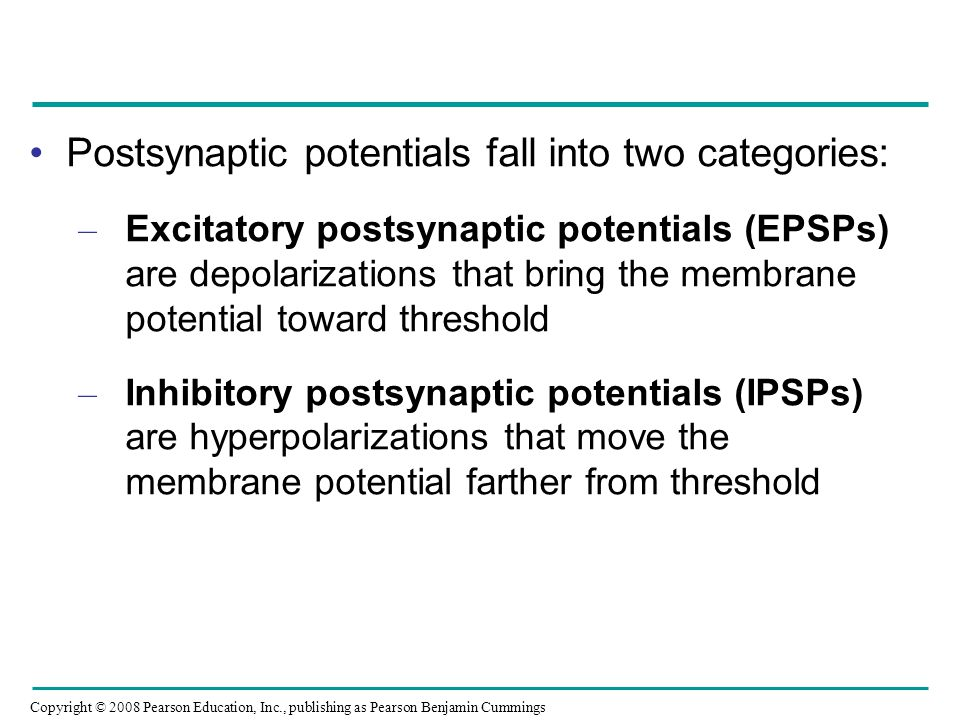 Postsynaptic potentials fall into two categories: