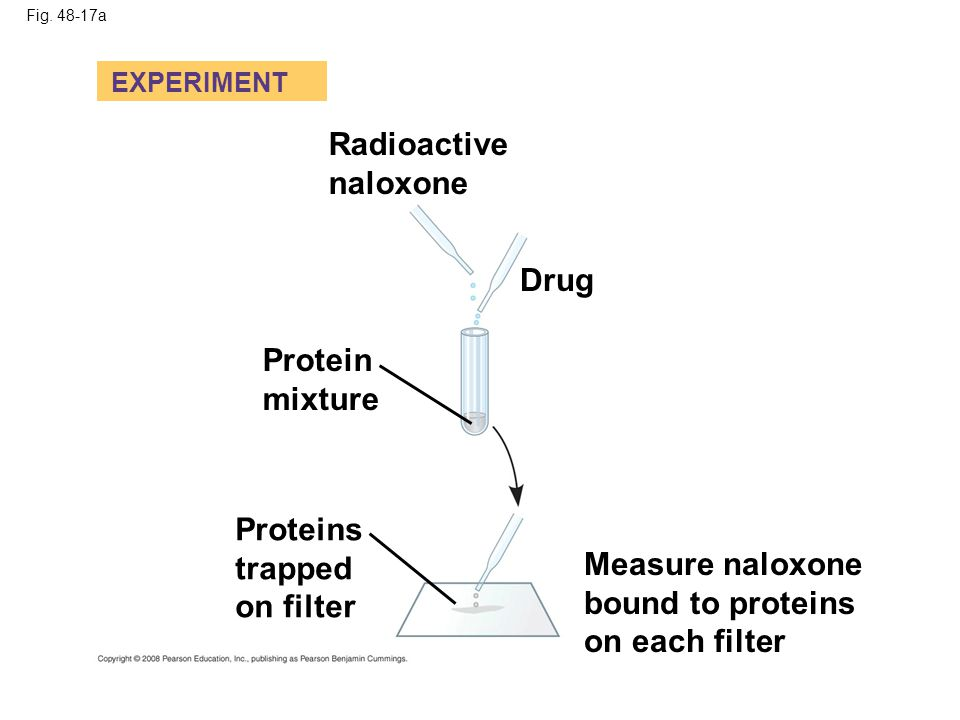 Radioactive naloxone Drug Protein mixture Proteins trapped on filter