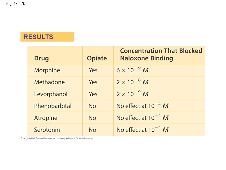 Fig. 48-17b RESULTS Figure 48.17 Does the brain have a specific receptor for opiates