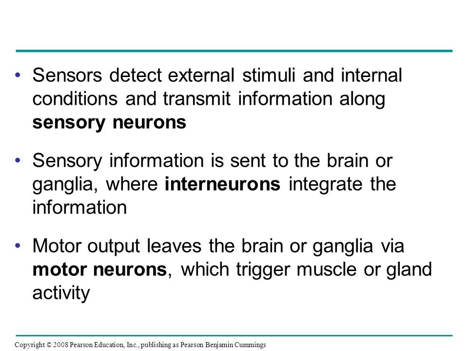 Sensors detect external stimuli and internal conditions and transmit information along sensory neurons