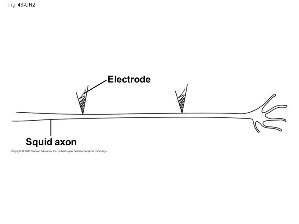 Fig. 48-UN2 Electrode Squid axon