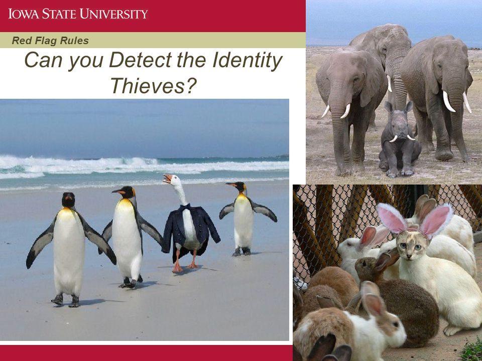 Can you Detect the Identity Thieves