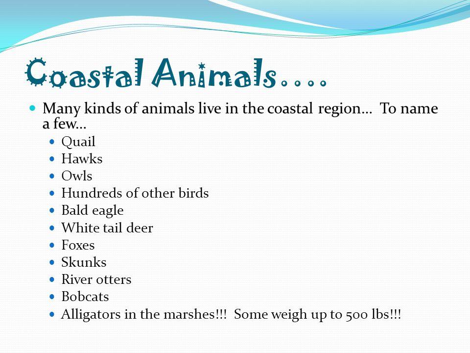 Coastal Animals…. Many kinds of animals live in the coastal region… To name a few… Quail. Hawks.