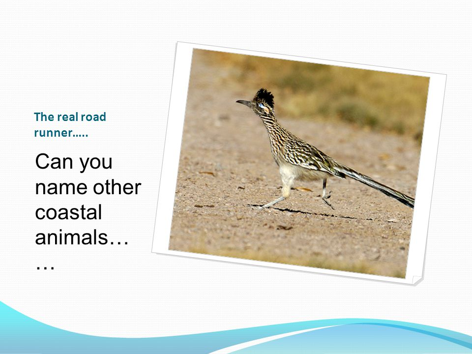 Can you name other coastal animals… …