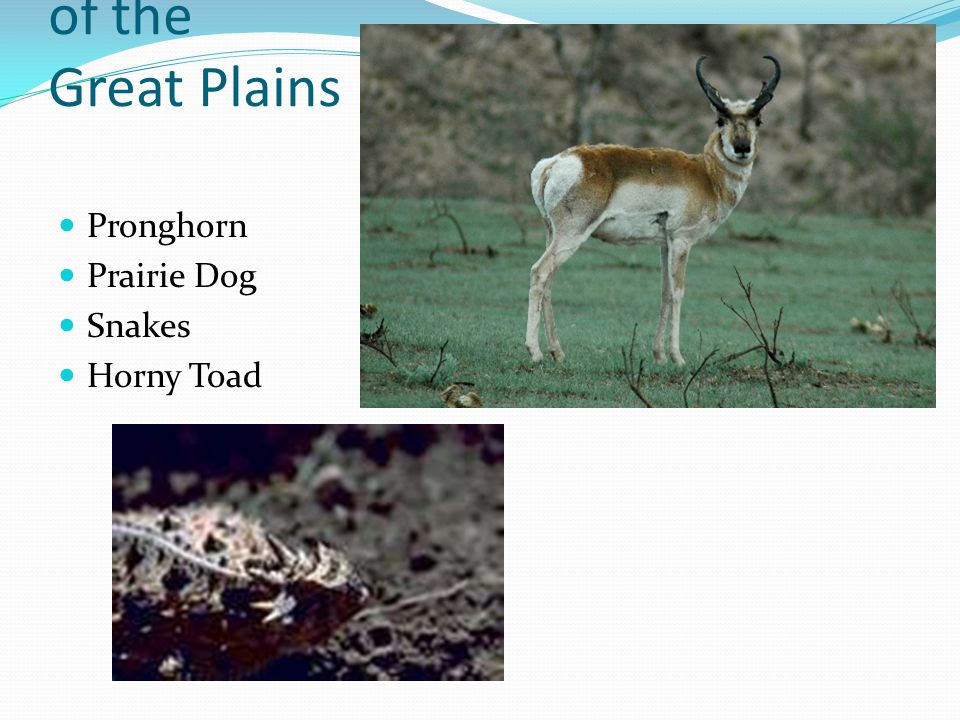 Animals of the Great Plains