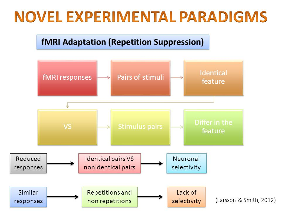 NOVEL EXPERIMENTAL PARADIGMS fMRI Adaptation (Repetition Suppression)