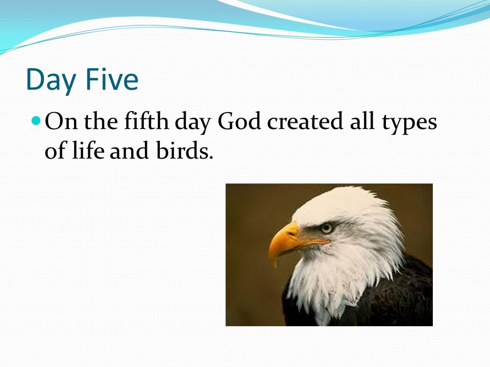 Day Five On the fifth day God created all types of life and birds.