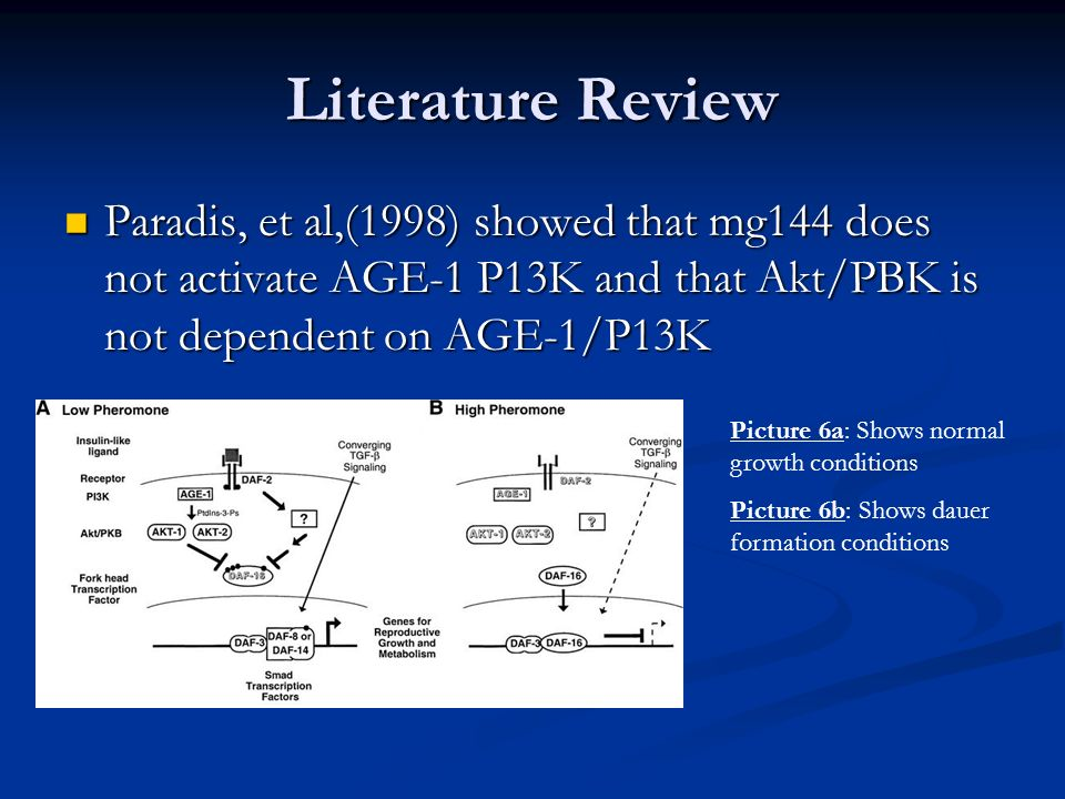 Literature Review Paradis, et al,(1998) showed that mg144 does not activate AGE-1 P13K and that Akt/PBK is not dependent on AGE-1/P13K.