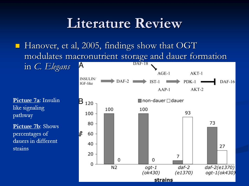 Literature Review Hanover, et al, 2005, findings show that OGT modulates macronutrient storage and dauer formation in C. Elegans.