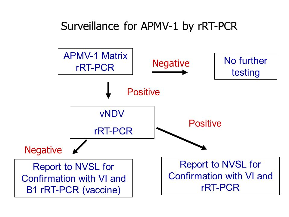 Surveillance for APMV-1 by rRT-PCR