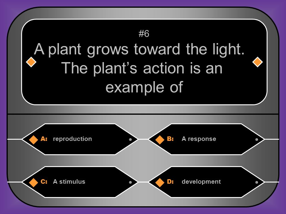 A plant grows toward the light. The plant's action is an example of