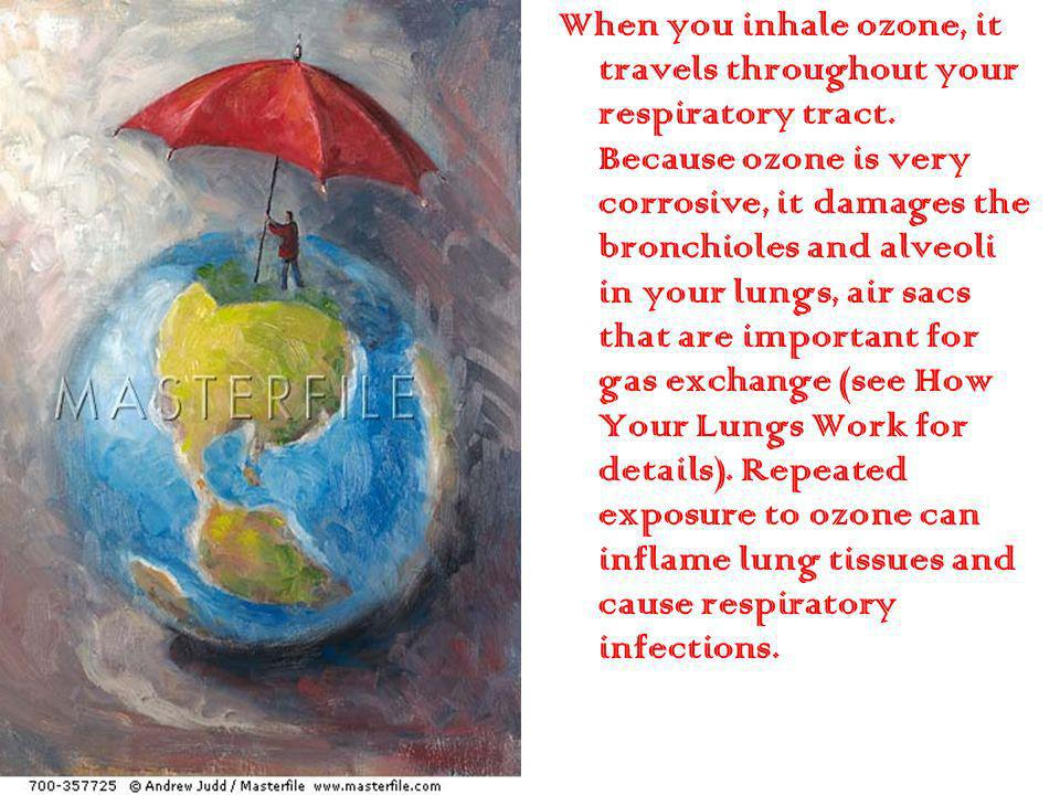 When you inhale ozone, it travels throughout your respiratory tract
