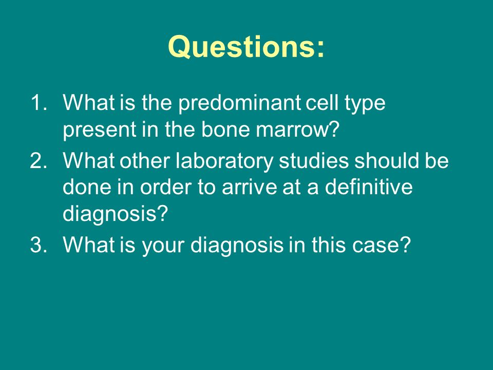 Questions: What is the predominant cell type present in the bone marrow