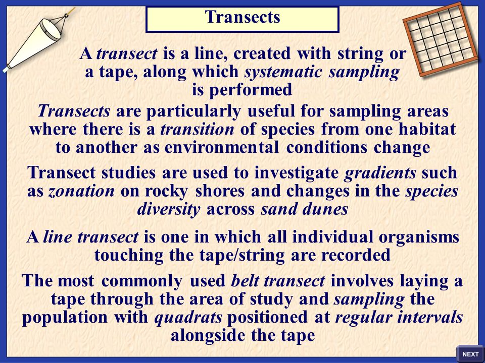 A transect is a line, created with string or