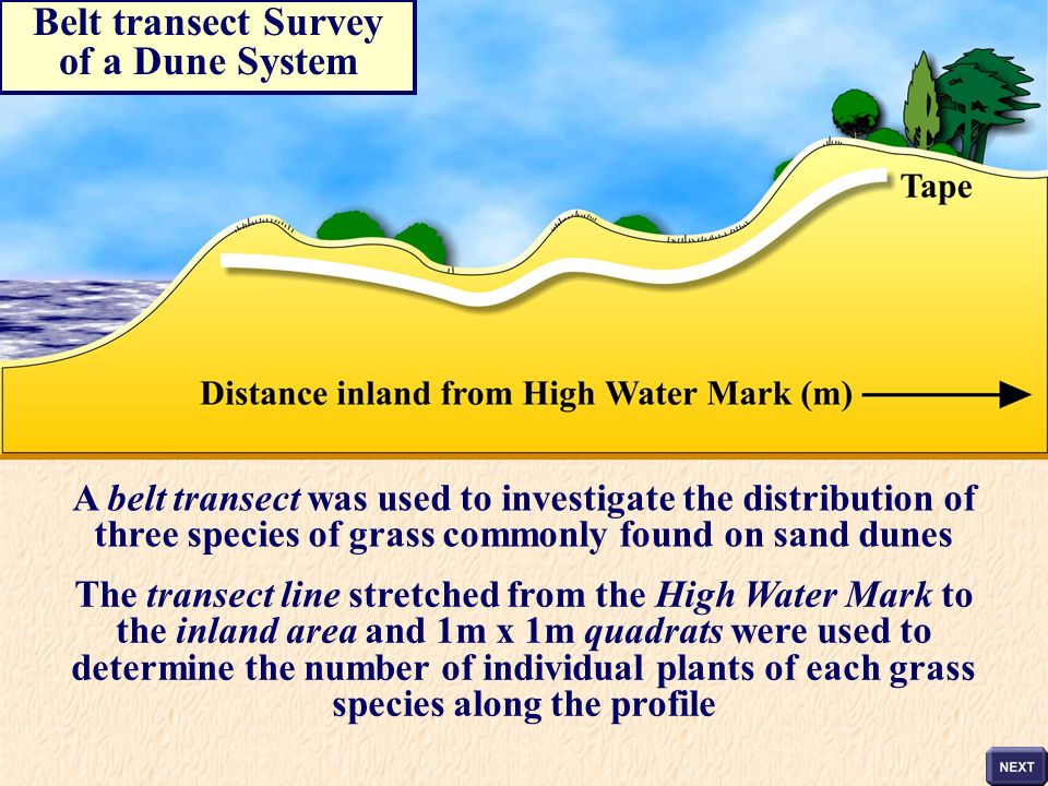 Belt transect Survey of a Dune System
