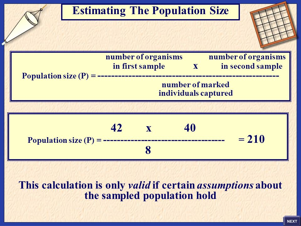 Estimating The Population Size 8