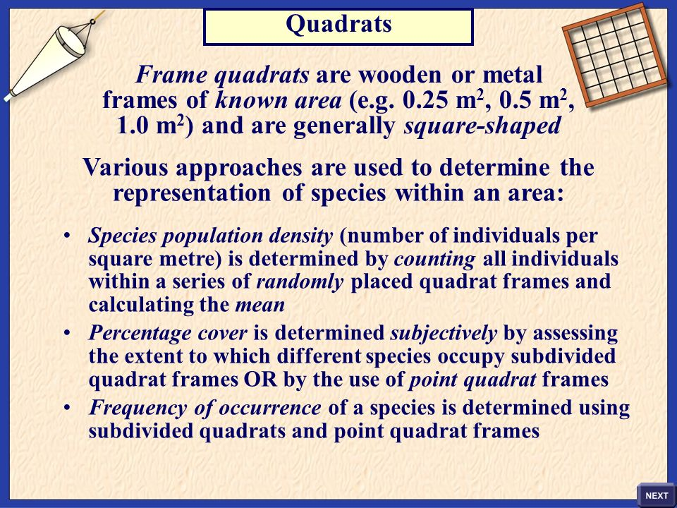 Frame quadrats are wooden or metal