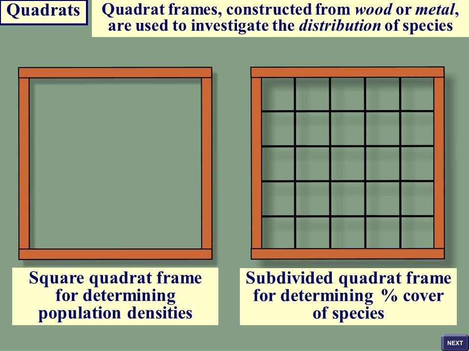 for determining population densities Subdivided quadrat frame