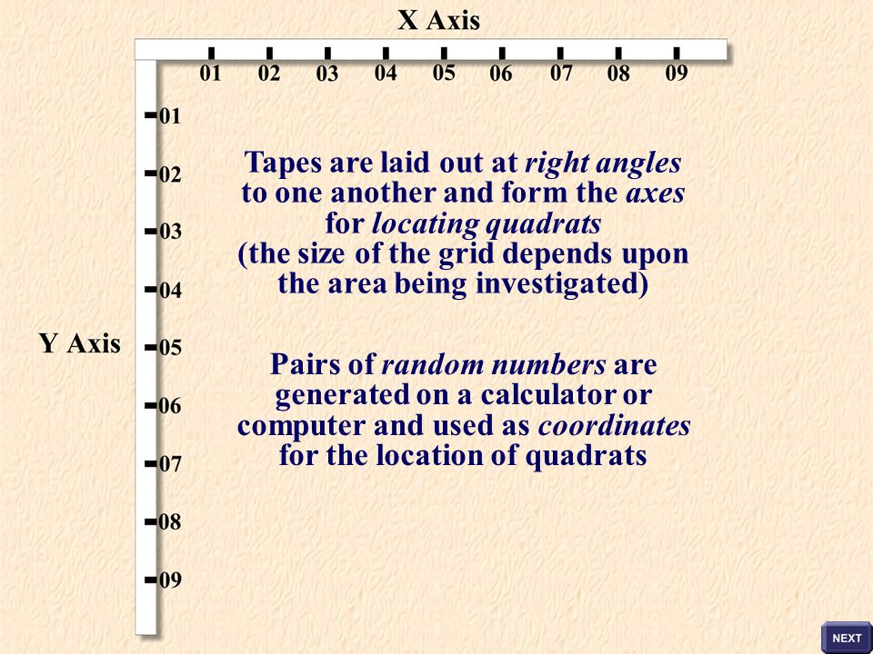 Tapes are laid out at right angles for the location of quadrats