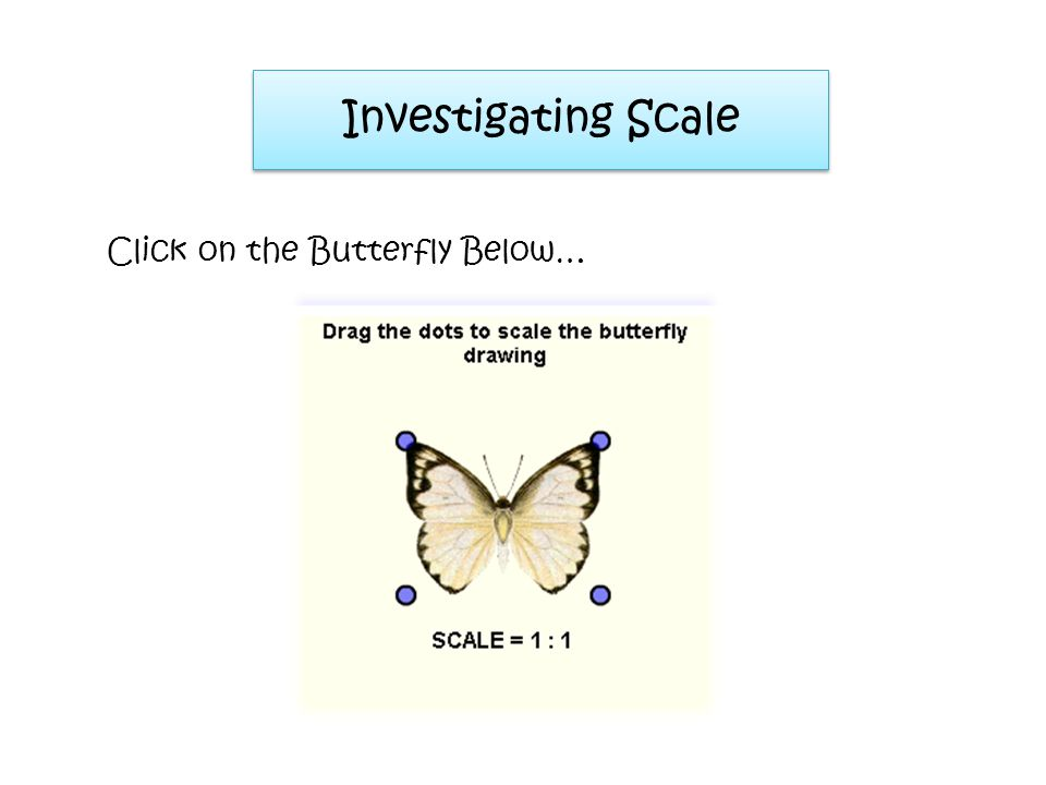 Investigating Scale Click on the Butterfly Below…