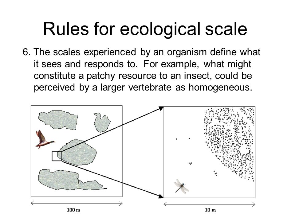 Rules for ecological scale