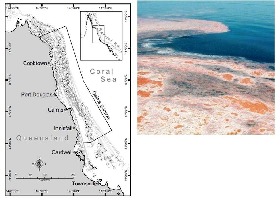 Coral dispersal on GBR is scale-free network