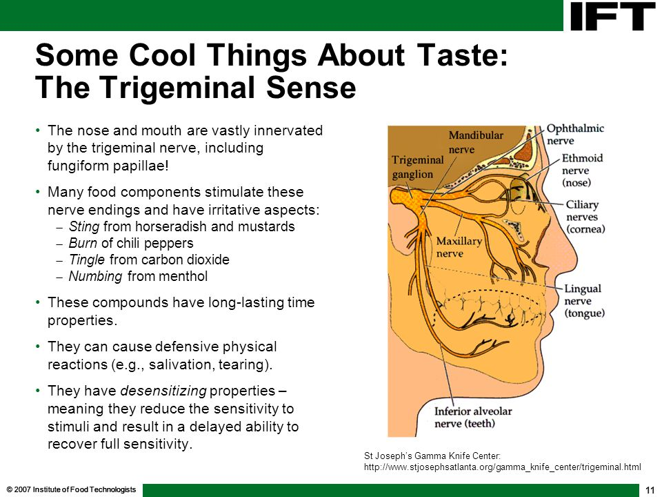 Some Cool Things About Taste: The Trigeminal Sense