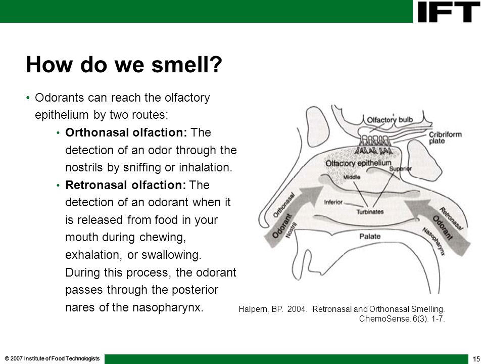 How do we smell Odorants can reach the olfactory epithelium by two routes: