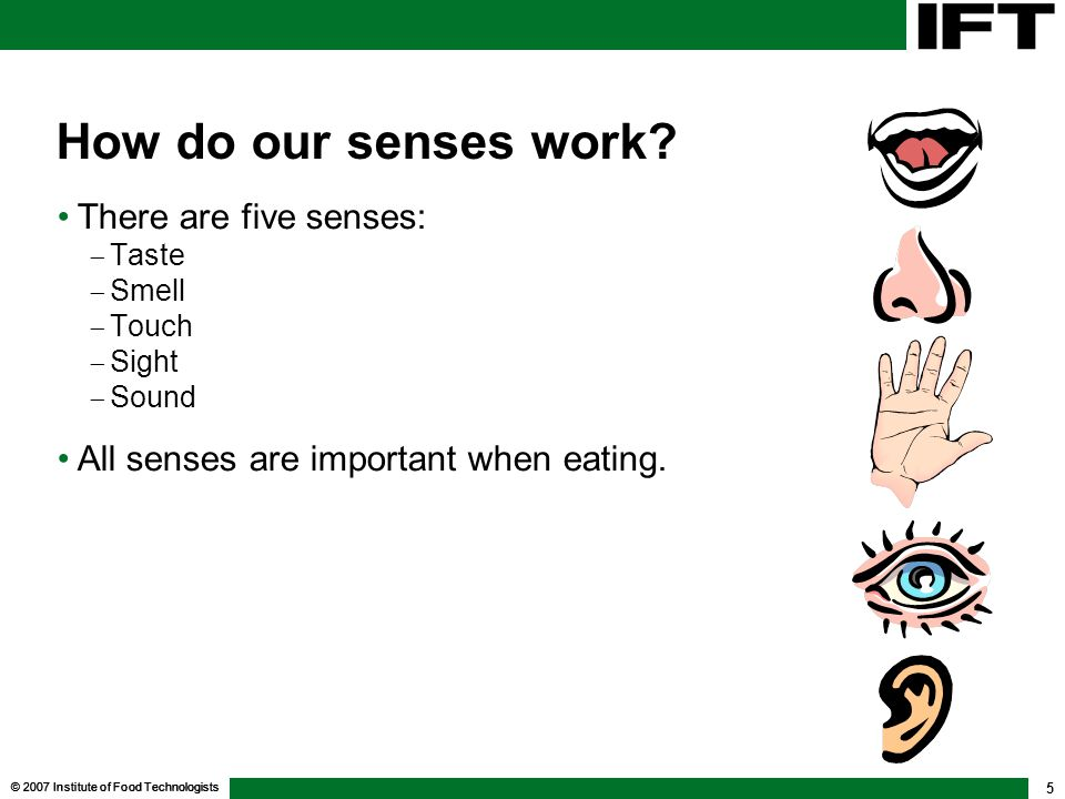 How do our senses work There are five senses: