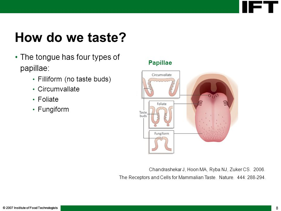 How do we taste The tongue has four types of papillae: