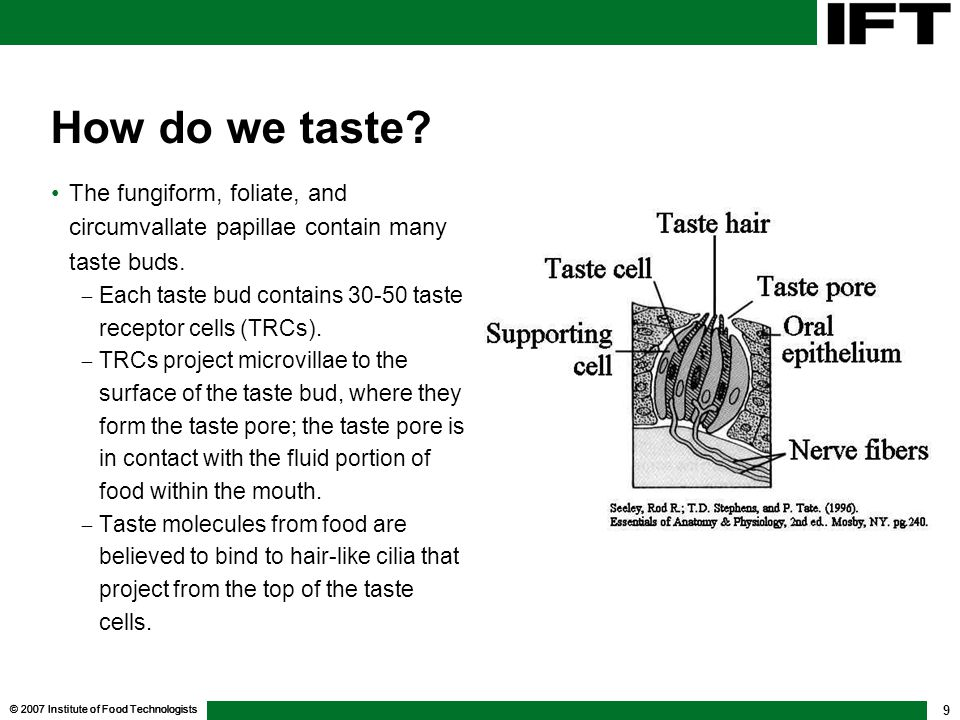 How do we taste The fungiform, foliate, and circumvallate papillae contain many taste buds.