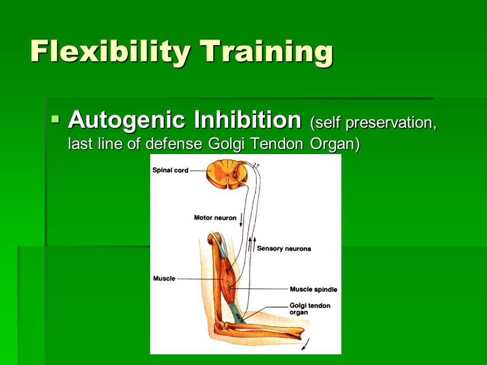 Flexibility Training Autogenic Inhibition (self preservation, last line of defense Golgi Tendon Organ)