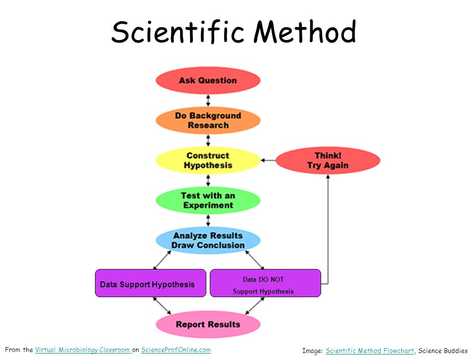Scientific Method Data Support Hypothesis Data DO NOT