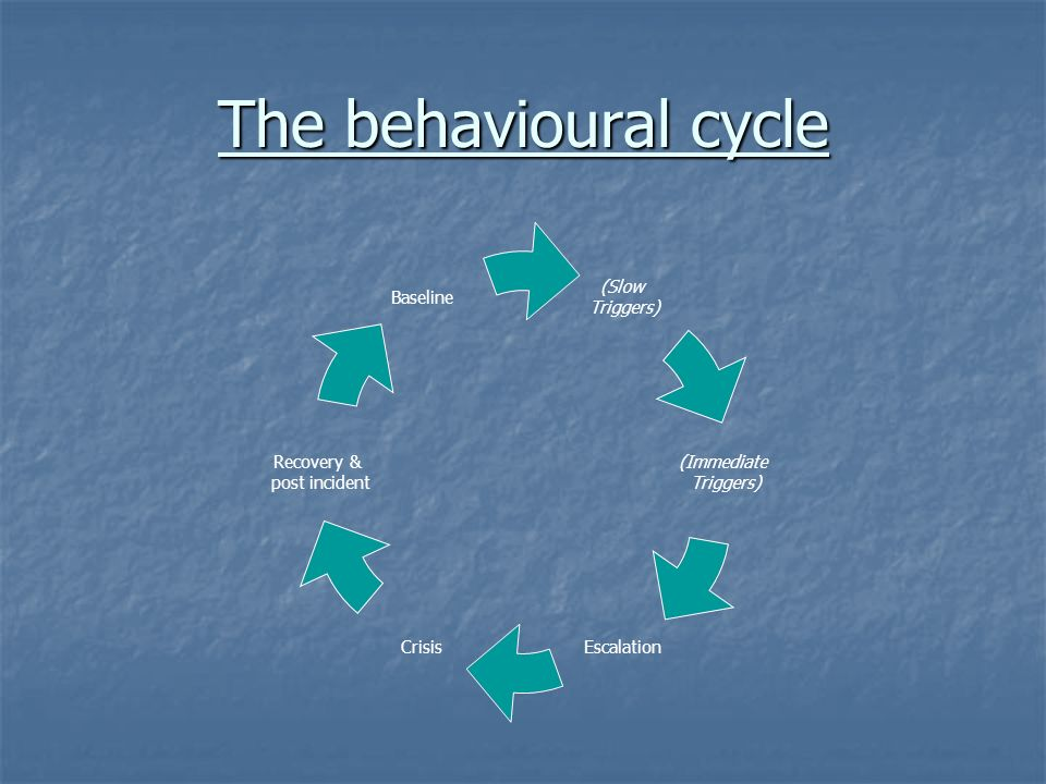 The behavioural cycle