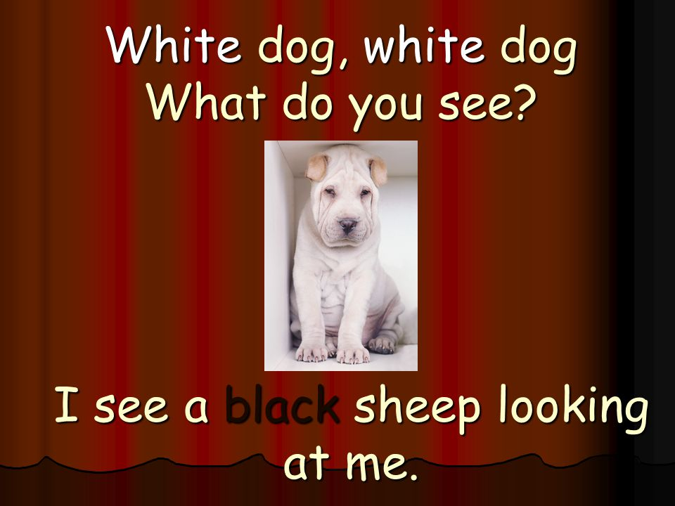 White dog, white dog What do you see