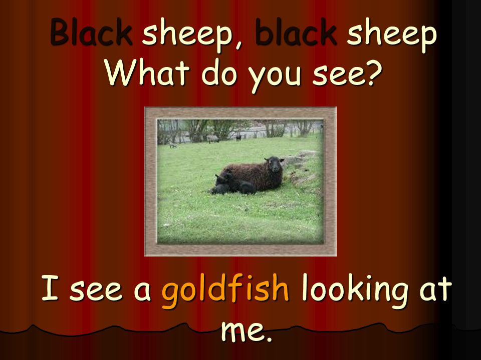 Black sheep, black sheep What do you see
