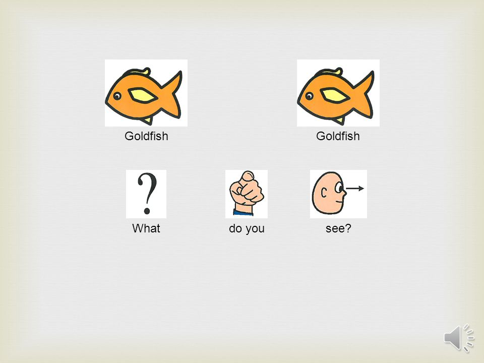 Goldfish What do you see