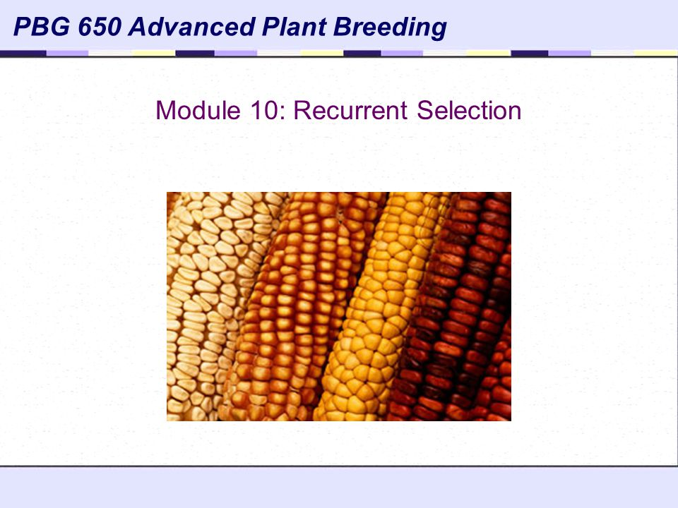 Module 10: Recurrent Selection