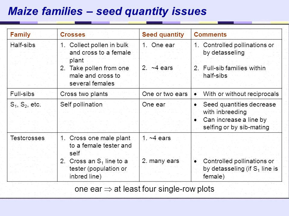 Maize families – seed quantity issues