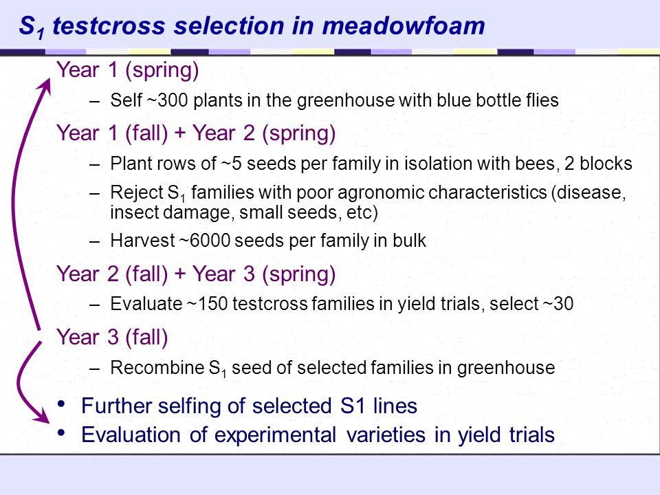 S1 testcross selection in meadowfoam