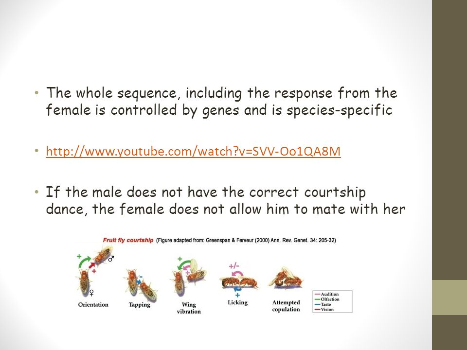 The whole sequence, including the response from the female is controlled by genes and is species-specific