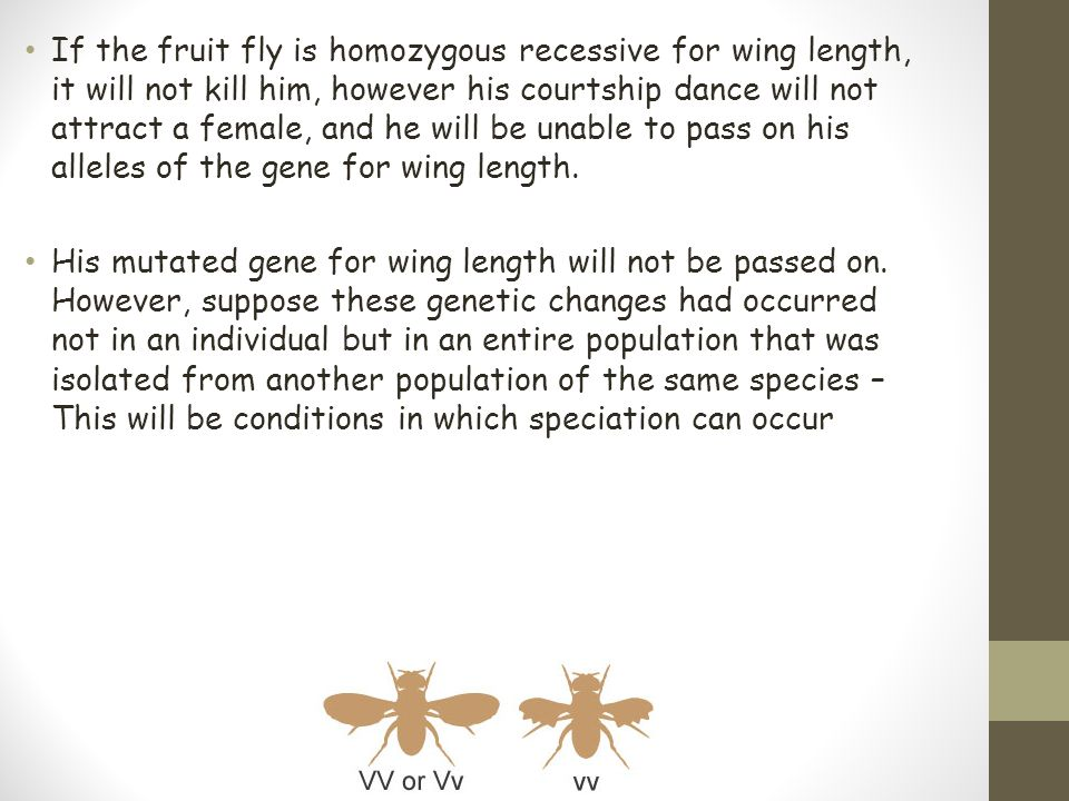 If the fruit fly is homozygous recessive for wing length, it will not kill him, however his courtship dance will not attract a female, and he will be unable to pass on his alleles of the gene for wing length.