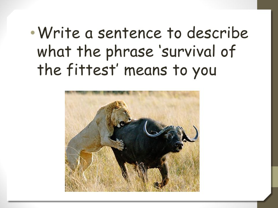 Write a sentence to describe what the phrase 'survival of the fittest' means to you