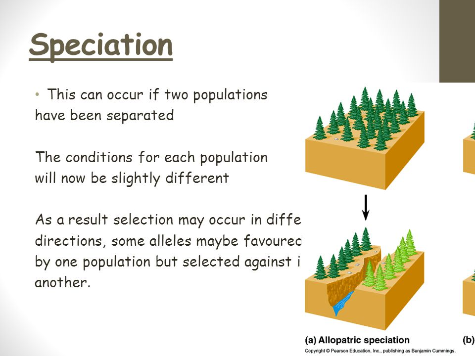 Speciation This can occur if two populations have been separated