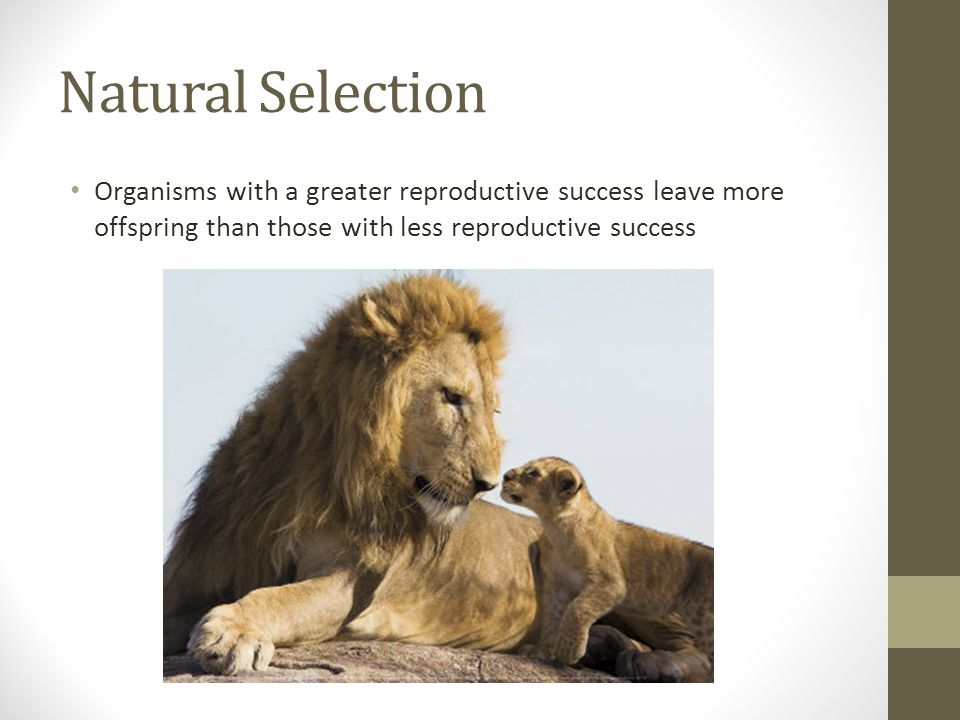 Natural Selection Organisms with a greater reproductive success leave more offspring than those with less reproductive success.